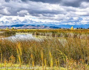 Ogden Bay Waterfowl Management Area, Utah, Landscape Photography, Nature Photography, Fine Art Photography, Wall Art, Home Decor, Gift