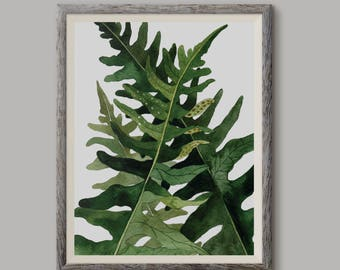 Paproć 1, Fern 1,(Polypodium vulgare) - illustration - print