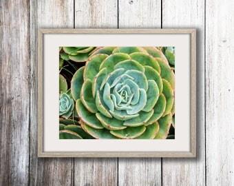 Succulent Cactus Wall Art Print -- Fine Art landscape photography, Flower, Close Up, Nature, Home Decor, HeatherRobersonPhoto