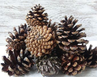 Set of 25 pine cones,DIY,Mountain pine,natural pine cones,hedgehogs,for wreaths,Christmas compositions,modeling,fantastic compositions