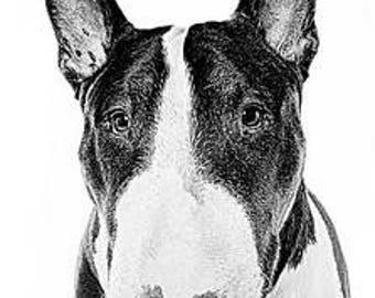A4 English Bull Terrier print