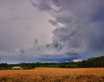 Hammill Field