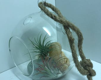 2 Airplants in a beautiful Glass Hanger