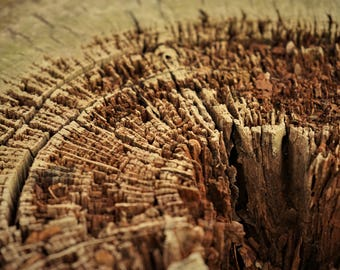 Rustic Landscapes - Hollowed Tree Rings