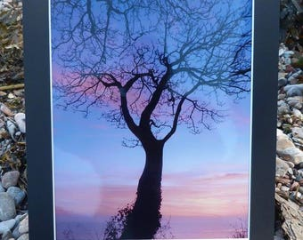 Lonely tree at sunrise - devon photography - sunrise photography - torbay