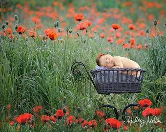 On Sale! Newborn Digital Backdrop/Digital Background/Red Poppy Field/Stroller Prop