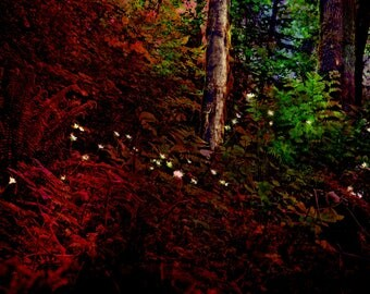 Peaceful Darkness, Flowers Glowing in the Dark, Forest scenery