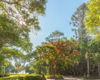 Limited edition, fine art print, giclee print, color photography, nature photograph, landscape photography, ringling museum, florida, trees