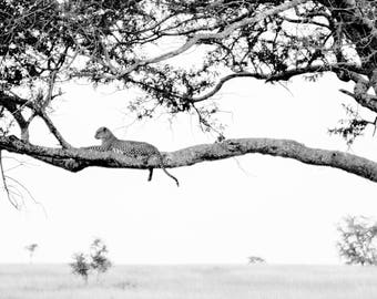 Limited edition fine art wildlife photography print: 'Up High