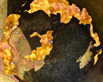 Nature Photography Print, Rustic Yellow Maple, Fine Art, Wall Prints