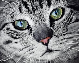 Cat eyes A3 print