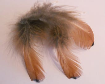Set of 3 natural feathers of pheasant 12 to 13 cm