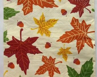 20 oak leaves and ACORNS to paper towels.   3670