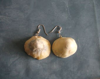 Pair of earrings with shells for pierced ears