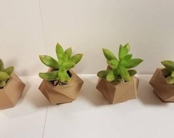 Minimalist Hexagon Succulent Planters (Pack of 4) - Succulents, Small Plants