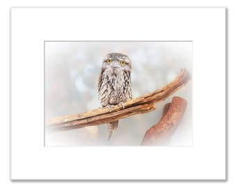 ET Wide Awake Matted Photo Print (5x7 inches), Tawny Frogmouth, Native Animal Rescue, Western Australia