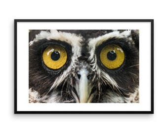 """Luna"""" Spectacled Owl Eyes Framed print"""