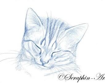 Sleeping Blue Kitten Original Pencil Drawing