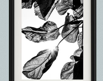 Black and White Leaves Print - Leaf Photography - Nature - Fine Art Photography - Monochrome - Detailed - Vertical - Wall Art - Leaf Art