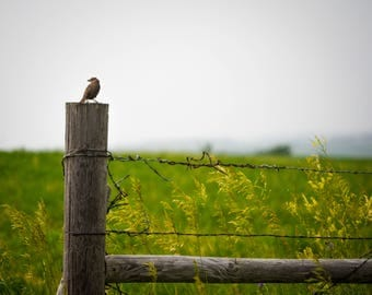 Bird on Wooden Fence