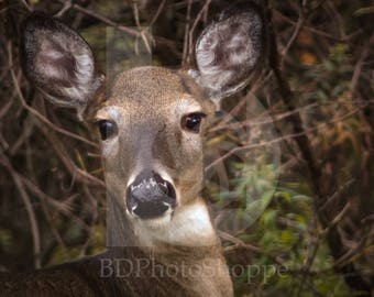Spotted by a Deer   Deer Photo Art   Deer Lover Gift   Fine Art Photography   Personalization   BDPhotoShoppe   Home Office Decor