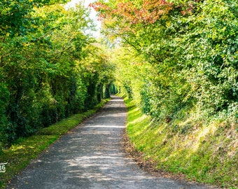The road to nowhere with a tree lined track down hill Photo / Poster / Canvas Colour