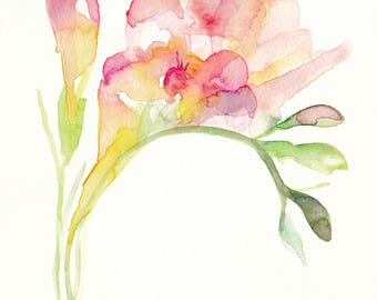 Freesia (pink) flower watercolour painting. Print