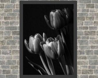 Tulip/tulips/flowers/print/photo/poster   Dutch tulips