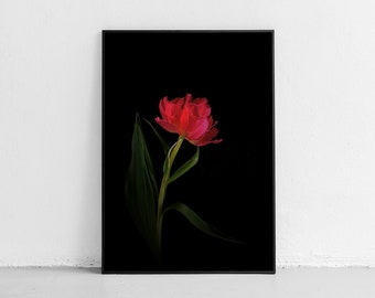 Wall Decor Entry Way, Tulip Prints, Tulip Art, Digital Photography, Bedroom Wall Decor, Bedroom Decor, Tulip Photo, Wall Art, Flower Print