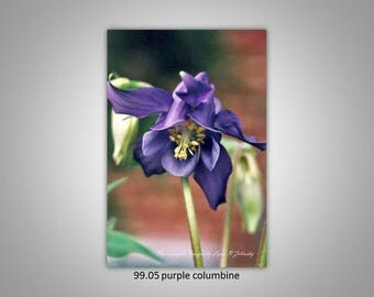 95.05 Purple Columbine Limited Edition, Signed and Numbered 5x8 Image