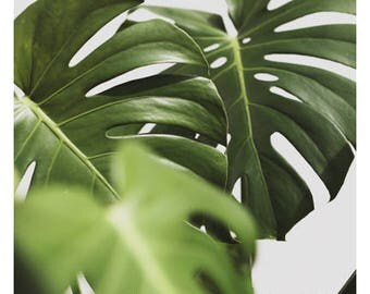 Nature Photograph - Leaf Photography - Botanical Photograph - Verdure #12 - Fine Art Photograph - Alicia Bock - Green - Floral Art - Leaves