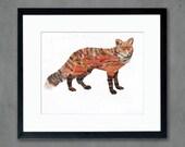 Animals of North America: Red Fox Art Print