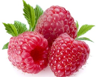 RASPBERRY Fragrance Oil Candle Scent - 1oz
