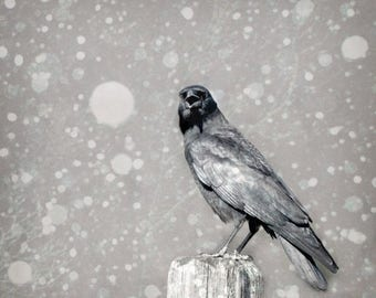 50% OFF SALE Crow Photograph, Winter,  Nature Photography, Black and White, Raven in Snow - 5x5 inch Gothic Photograph -Stately Raven of Yor