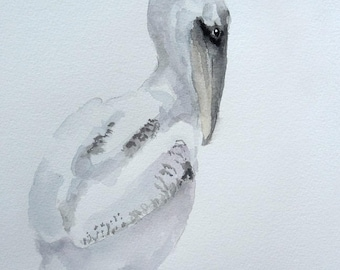 Pelican watercolor painting baby bird Nursery art shorebird chick