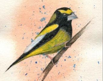 Evening Grosbeak Bird - Original Ink Watercolor Painting Drawing - 4.5 x 7