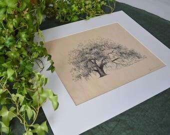 Ophelia Oak Tree Art Print on Wood Veneer - Pen and Ink Drawing - 11x14 - Hofwyl Plantation Georgia