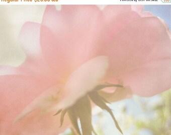 CIJ SALE Pink Rose Photograph, Spring Floral, Garden Rose, Romantic Garden, Bedroom Decor, Gift for Her, Gift for Mom, Cottage Decor, Rose W