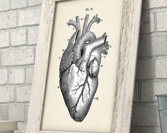 Anatomical Heart - 11x14 Unframed Art Print - Great Gift for Doctors, Medical / Nursing Students or Nurses