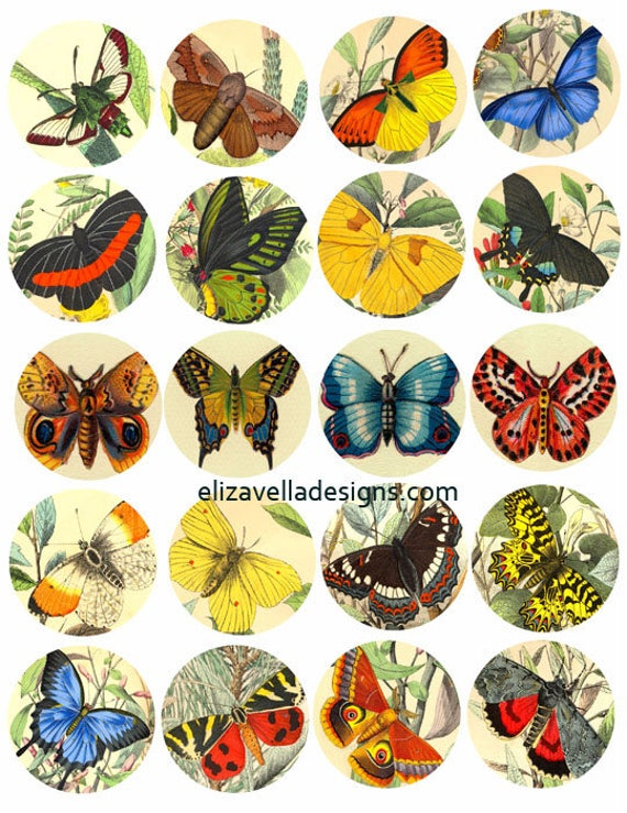 butterfly vintage color illustrations clipart 2 inch circles digital download collage sheet image graphics insect nature printable