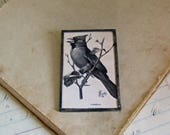 Cardinal Illustration Pin Vintage Book Print