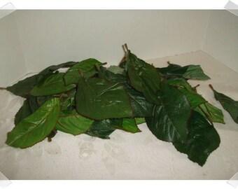 Assorted Leaf Bag/ Floral Supplies/ Craft Supplies*