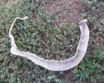 "Cruelty Free - No. 101 - 33"" + Arizona Black Rattlesnake - Taxidermy Religious Educational Magic Spell Art Rattler Venomous Hot - 7"