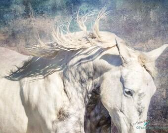 Canvas print, horse, equestrian, photo, art print, running horse, gray, grey, white, purple, blue, turquoise, freedom run