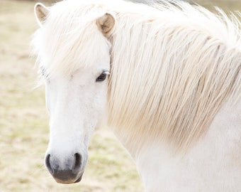 White Horse Picture, Equestrian Photography, Physical Print, Farmhouse Decor