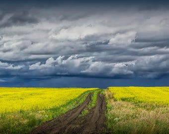 Canola Field, Dirt Road, Seed Field, Canola Crop, Prairie Farm, Southern Alberta, Canada Landscape, Fine Art, Landscape Photograph