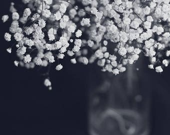 Nature Photograph: Babay's Breath in Black and White Flower Print Fine Art Photography Baby's Breath Flower Photo, Still life Flower Photo