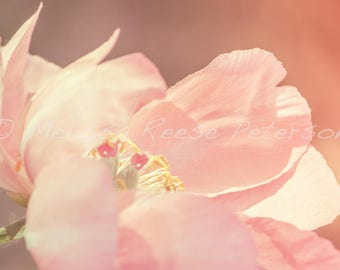 Pink Peony, Flower Photography, Fine Art Print, Nature, Flower Garden, Floral Wall Art, Blooms, Blossoms, Peonies Photograph, Home Decor