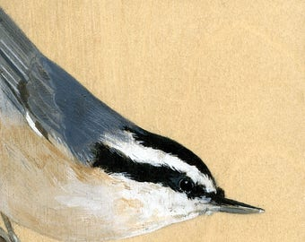 """Reproduction of original """"Nuthatch"""" painting"""