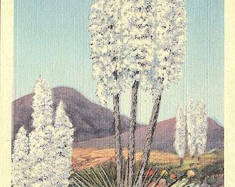 Yucca, Desert, Flower of the Desert - Vintage Postcard - Postcard - Unused (EE)